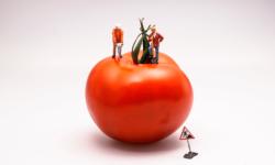 Pomodoro: técnica para manter o foco e aumentar a produtividade
