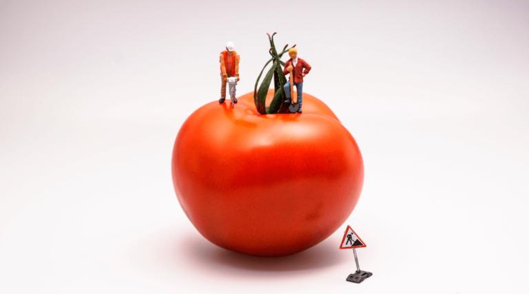 pomodoro-destaque